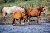 Wild Horses 1