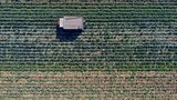 Farmers cultivating crops behind truck - 229676712