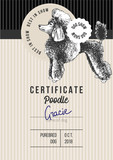 Dog show certificate with poodle - 229691916