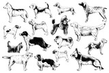 Breeds of dogs - 229691960