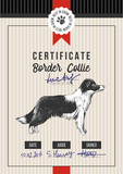 Dog show certificate with border collie - 229691964