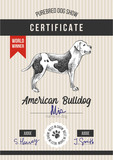 Dog show certificate with american bulldog - 229691987