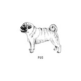 Hand drawn pug - 229692113