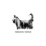 Hand drawn Yorkshire Terrier - 229692142