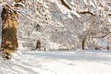Under snow covered oak trees