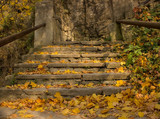 stairs in autumn forest
