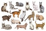 16 hand drawn cat breeds - 229708132