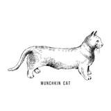Hand drawn munchkin cat - 229708340