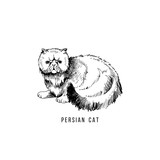 Hand drawn persian cat - 229708382