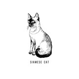 Hand drawn siamese cat - 229708393