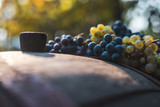 Blue grapes on the wine barrel in the vineyard. Grapes with a blurred autumn bokeh background.