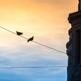 Pigeons on a power line in the big city in the light of the setting sun. - 229711952