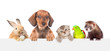 Leinwanddruck Bild - Group of pets  over empty white banner. isolated on white background. Space for text