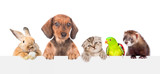 Group of pets  over empty white banner. isolated on white background. Space for text - 229714341
