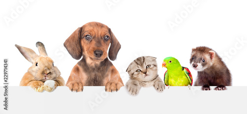 Leinwanddruck Bild Group of pets  over empty white banner. isolated on white background. Space for text