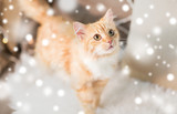 pets, christmas and hygge concept - red tabby cat on sofa with sheepskin at home in winter over snow