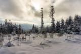 Winter landscape in the Polish Tatra Mountains.