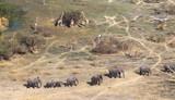 Elephants and giraffes in the Okavango delta (Botswana) - 229774715