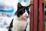 A black and white street cat portrait