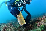 Buceo - 229805102