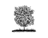 Hand Drawn Vector Plant of Green Oak Tree Agriculture Sign Symbol Logo Template Design Inspiration