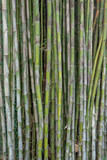 green short bamboo