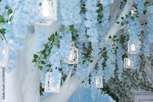 Tree With Blue Flowers Hanging Flowers Blue Flowers The