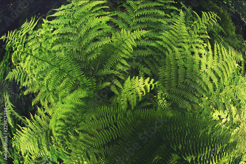 Fern plant in the shadow of trees