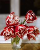 Тюльпаны в вазе - 229881514