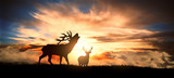 deers at sunset - 229893197