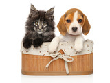 Kitten and puppy together - 229898959
