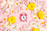 Asters flowers with alarm clock on a pink background.
