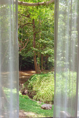 Window view of trees and river in green forest