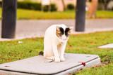 Cute cat - in a fall season