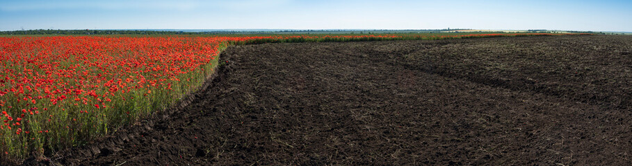 Panorama of poppy field and a part of plowed land