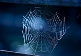 nice wet web - 229918561