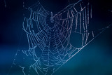 web with water drops - 229918570