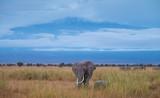 an elephant on savanna under the sky - 229922180