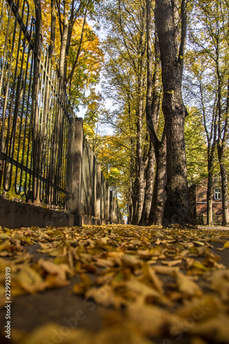 Foto Murales A beautiful autumn cityscape with a bright colors in trees. Fall leaves in city, Riga, Latvia.