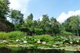 Seerosen im Wasser Höhenpark Killesberg Stuttgart