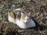 Кот. Кошка.