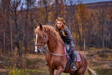 Portrait of a young beautiful woman with long brown hair. Woman on a horse walk in the forest.