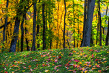 autumn forest selective focus background with fallen leaves - 229960399