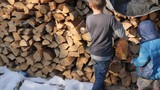 Kids getting fire wood in winter - 229988346