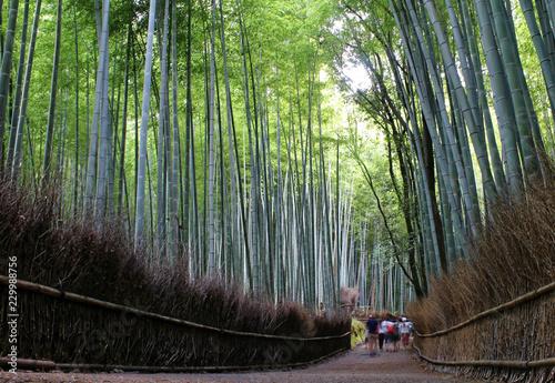 Kyoto, Japan - July 19, 2017: The Arashiyama Bamboo Grove of Kyoto, Japan. © JEROME LABOUYRIE