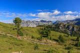 Rugged environment with conifer trees and gras hills in the Swiss National Park, Graubuenden, Switzerland. - 229996785