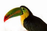 Portrait of rainbow toucan - 229996945