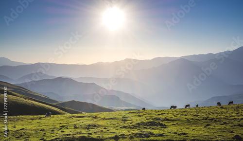 Wild grass on highland meadow  in Artvin in Turkey - 229999761
