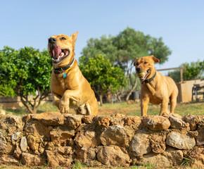 pet animals, dogs © juanjo