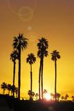 Beach sunrise with palm trees - 230021972